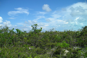 Land for Sale at Large Corner Lot Long Island, Bahamas