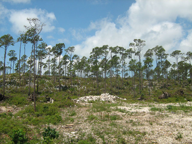 Land for Sale at Large Hilltop Lot 9 In Great Cistern Abaco, Bahamas