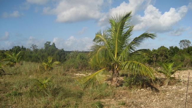 Land for Sale at Great Interior Lots, South Eleuthera! Wemyss Bight, Eleuthera, Bahamas