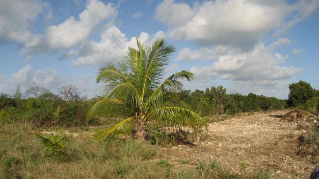 Land for Sale at Great Interior Lots, South Eleuthera! Lot 3K Wemyss Bight, Eleuthera, Bahamas