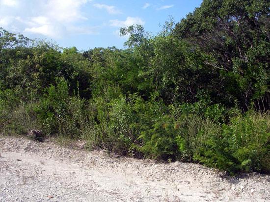 Land for Sale at Full of Possibilities Bahama Island Beach, Exuma, Bahamas