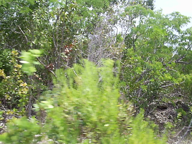 Land for Sale at Quiet Serenity Long Island, Bahamas