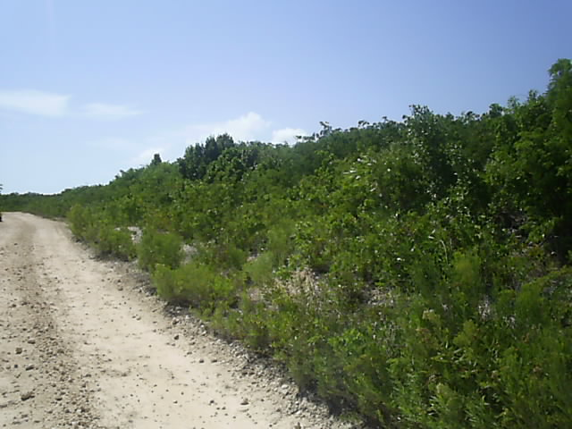 Terre / Lot de terrain pour l Vente à Ideal Investment Property Long Island, Bahamas