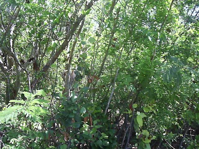 Land for Sale at A Large Multi-family Lot Stella Maris, Long Island, Bahamas