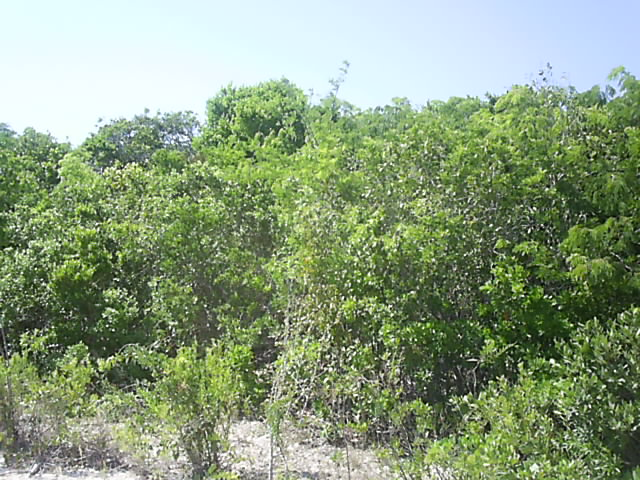Land / Lot for Sale at A Development Opportunity Long Island, Bahamas
