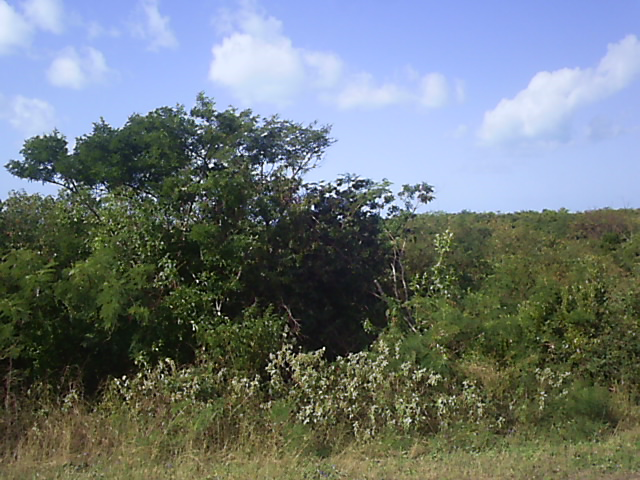 Land for Sale at A large Seaview Lot Long Island, Bahamas