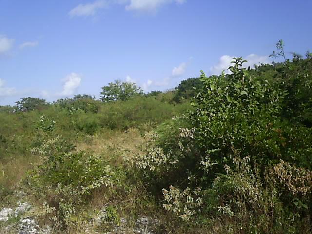 Land for Sale at Acreage in Salt Pond, Long Island - MLS 29254 Long Island, Bahamas