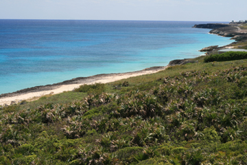 Land for Sale at Dramatic, Beautiful Waterfront Acreage on Bookies Bay (MLS18952) Abaco, Bahamas