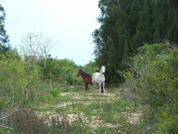 Land for Sale at Acreage in Rock Sound Rock Sound, Eleuthera, Bahamas