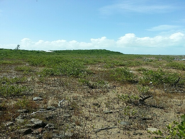 Land for Sale at Jumbey Hill Long Island, Bahamas