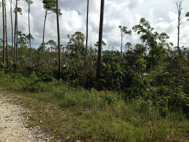 Land for Sale at Homesite in Lucaya Arden Forest, Grand Bahama, Bahamas