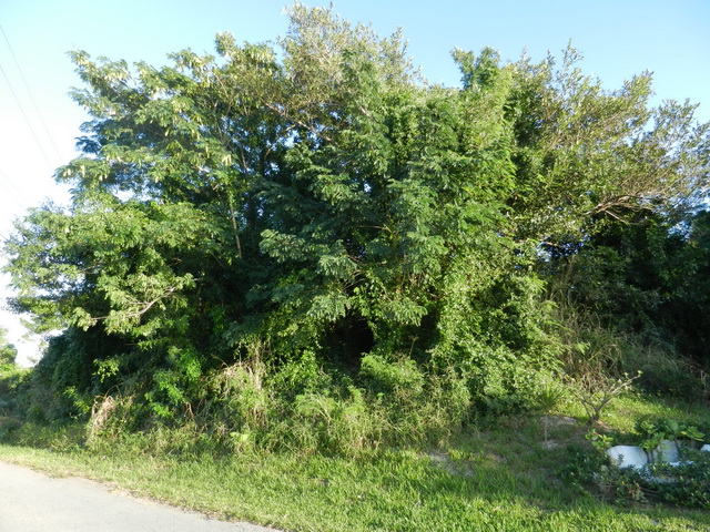 Land for Sale at Well located residential lot in Coral Lakes Coral Harbour, Nassau And Paradise Island, Bahamas