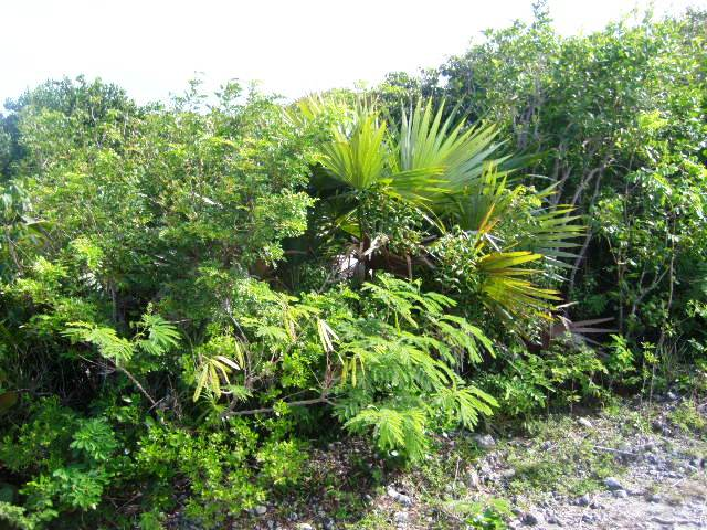 Land for Sale at Bargain Lot Near Surfer's Beach in Gregory Town Eleuthera Eleuthera, Bahamas
