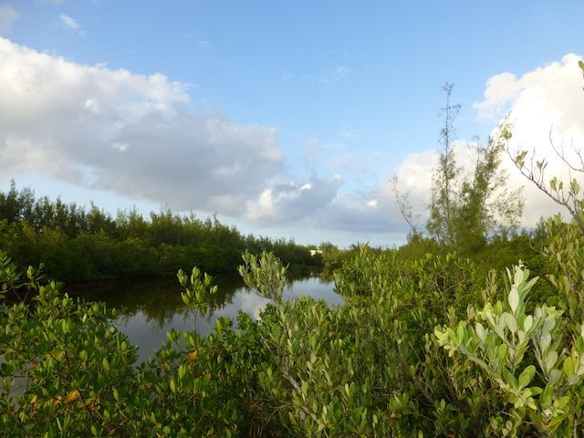 Land for Sale at TEAL DUCK LAKE LOTS, WHALE POINT, ELEUTHERA, GREAT OPPORTUNITY! Whale Point, Eleuthera, Bahamas