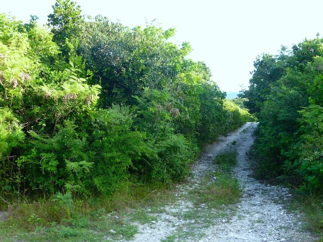 Land for Sale at Great Elevated Lots at Eleuthera Island Shores Eleuthera, Bahamas