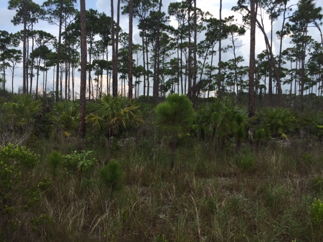 Land for Sale at Commercial lot off East Sunrise Highway Grand Bahama, Bahamas