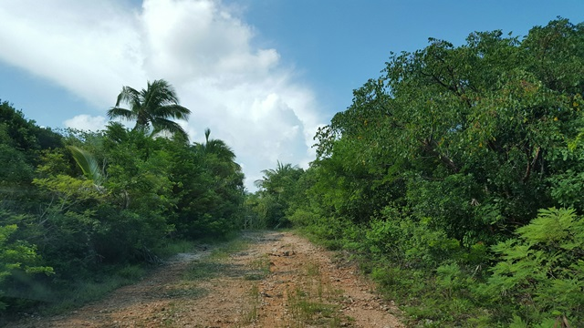 Land for Sale at Pie of a Lot, Oleander Gardens, Gregory Town MLS 23996 Eleuthera, Bahamas