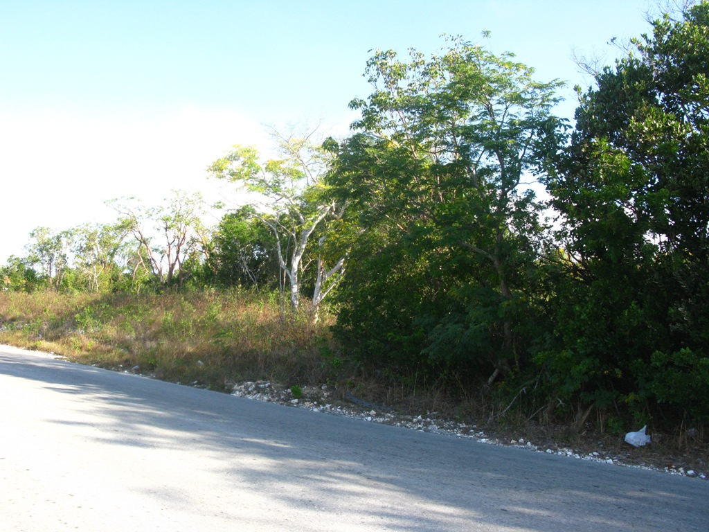 Two lots on Main Eleuthera Road Palmetto Point, Eleuthera, Bahamas