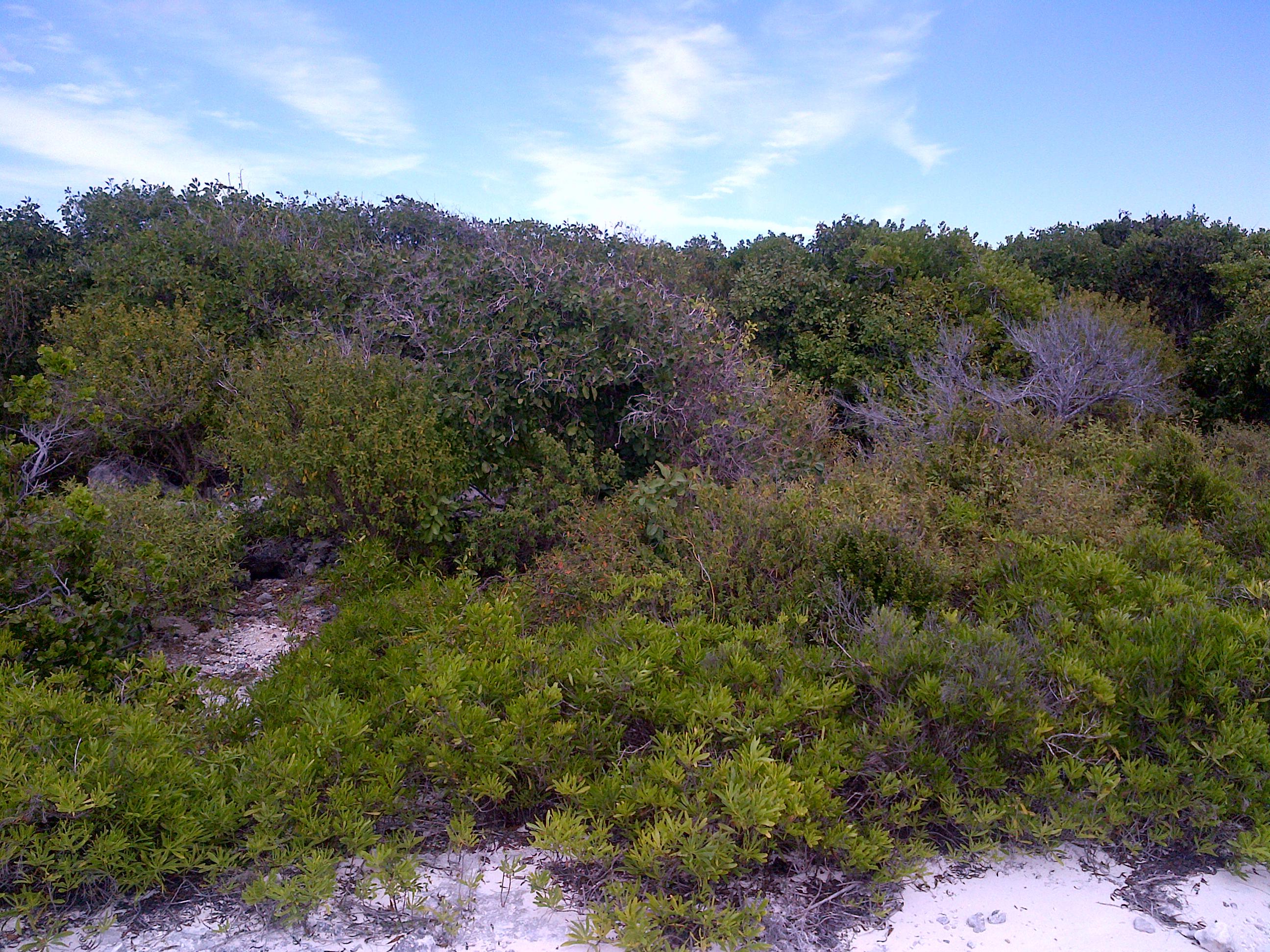 Land for Sale at San Salvador Lot Columbus Landings, San Salvador, Bahamas