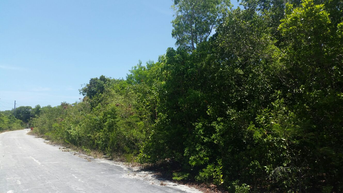 Land for Sale at Lovely Lot with Harbour Views in Rock Sound Eleuthera- priced to sell! Rock Sound, Eleuthera, Bahamas