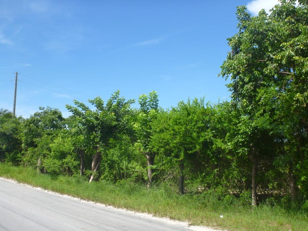 đất / lô vì Bán tại Acreage on Russell Island Eleuthera, Bahamas
