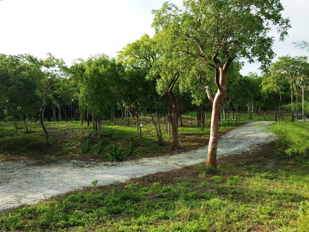 Land for Sale at Residential Lot, Banks Road, Unicorn Cay, Eleuthera Eleuthera, Bahamas