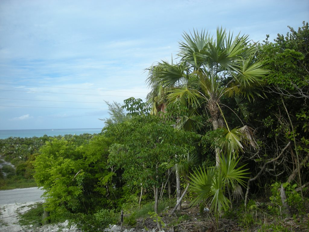 Land for Sale at Great Harbour Drive, Lot 16 Great Harbour Cay Great Harbour Cay, Berry Islands, Bahamas