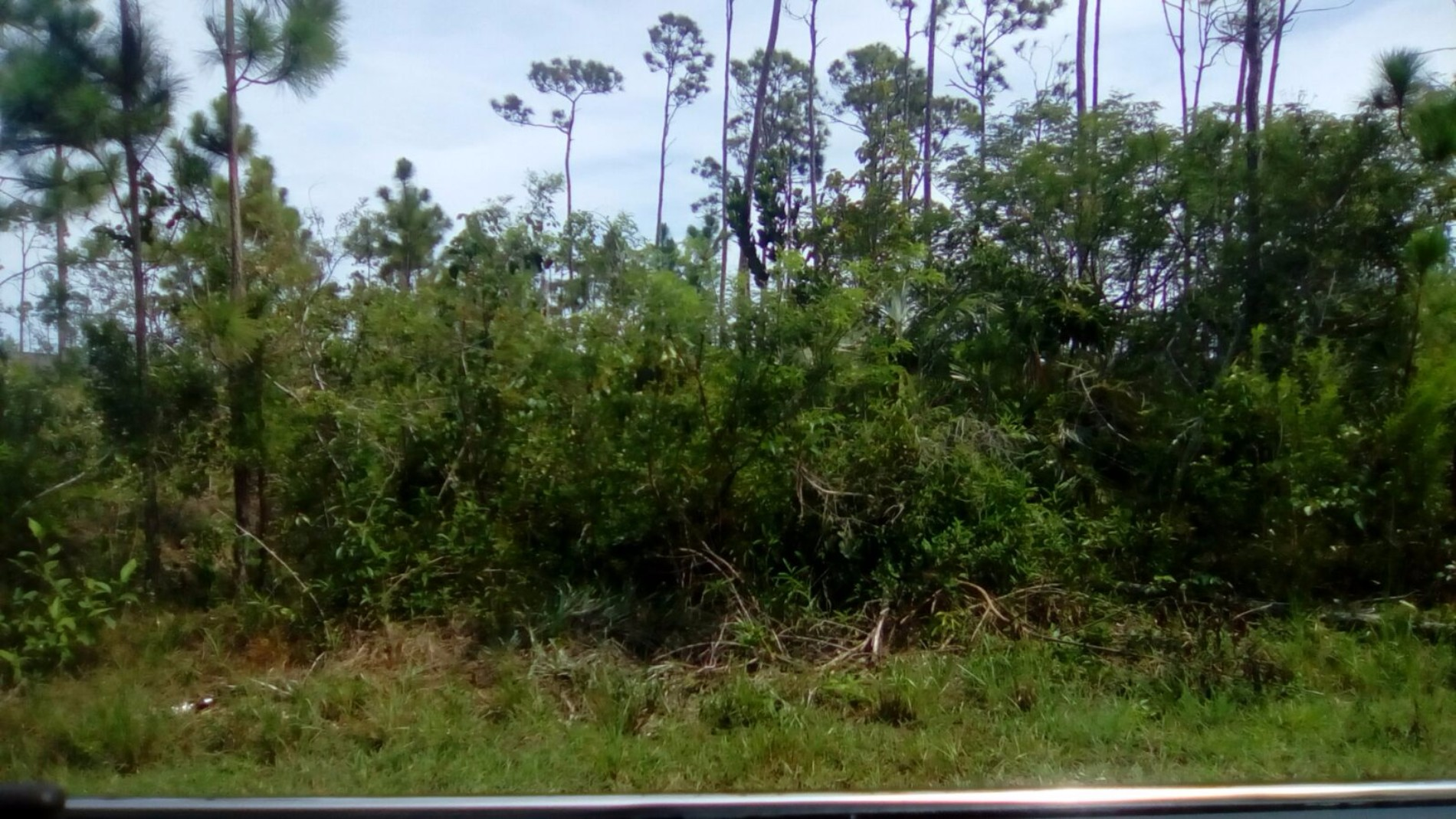 Land for Sale at Single Family Lot in Sherwood Forest (MLS #30796) Sherwood Forest, Grand Bahama, Bahamas