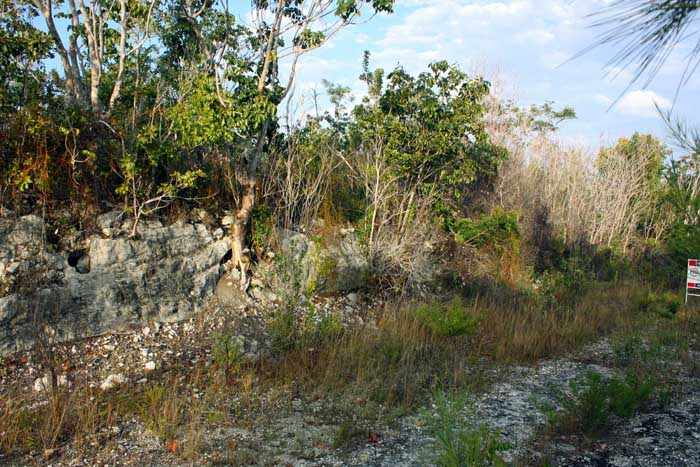 Additional photo for property listing at Oversized Lot with Elevation in Bahama Palm Shores - MLS 27833 Bahama Palm Shores, Abaco, Bahamas