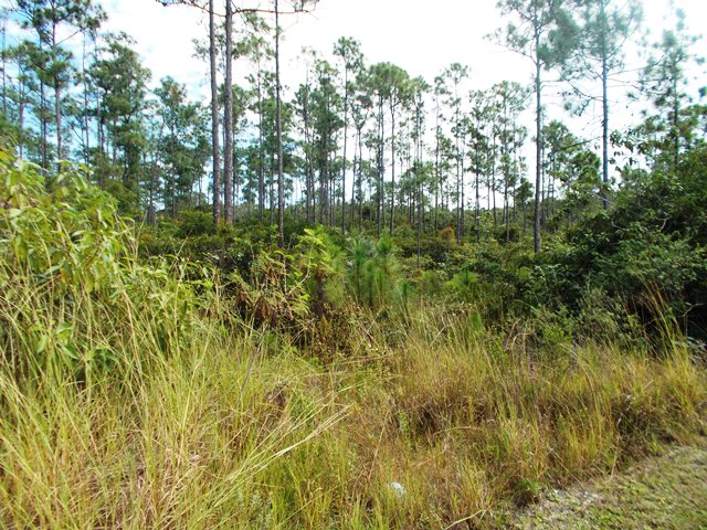 Additional photo for property listing at Beautiful 5 acre tract on South Ocean Boulevard Bahamas