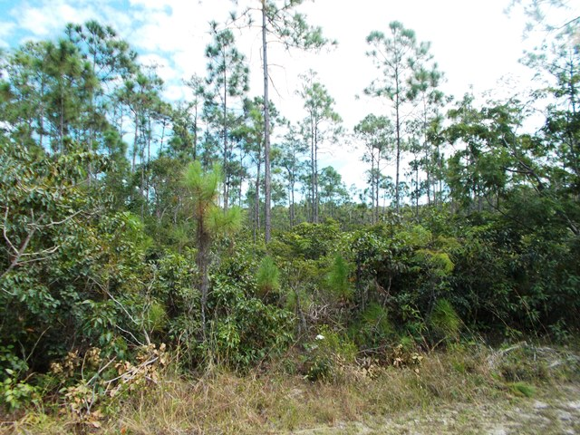 Additional photo for property listing at Beautiful 5 acre tract on South Ocean Boulevard バハマ