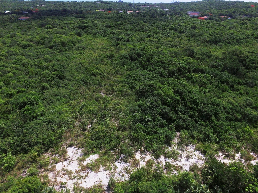 Additional photo for property listing at Exceptional Value Residential Lots Palmetto Point MLS 27613 Palmetto Point, Eleuthera, Bahamas