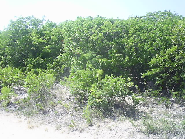 Additional photo for property listing at Another Great Investment Opportunity Long Island, Bahamas