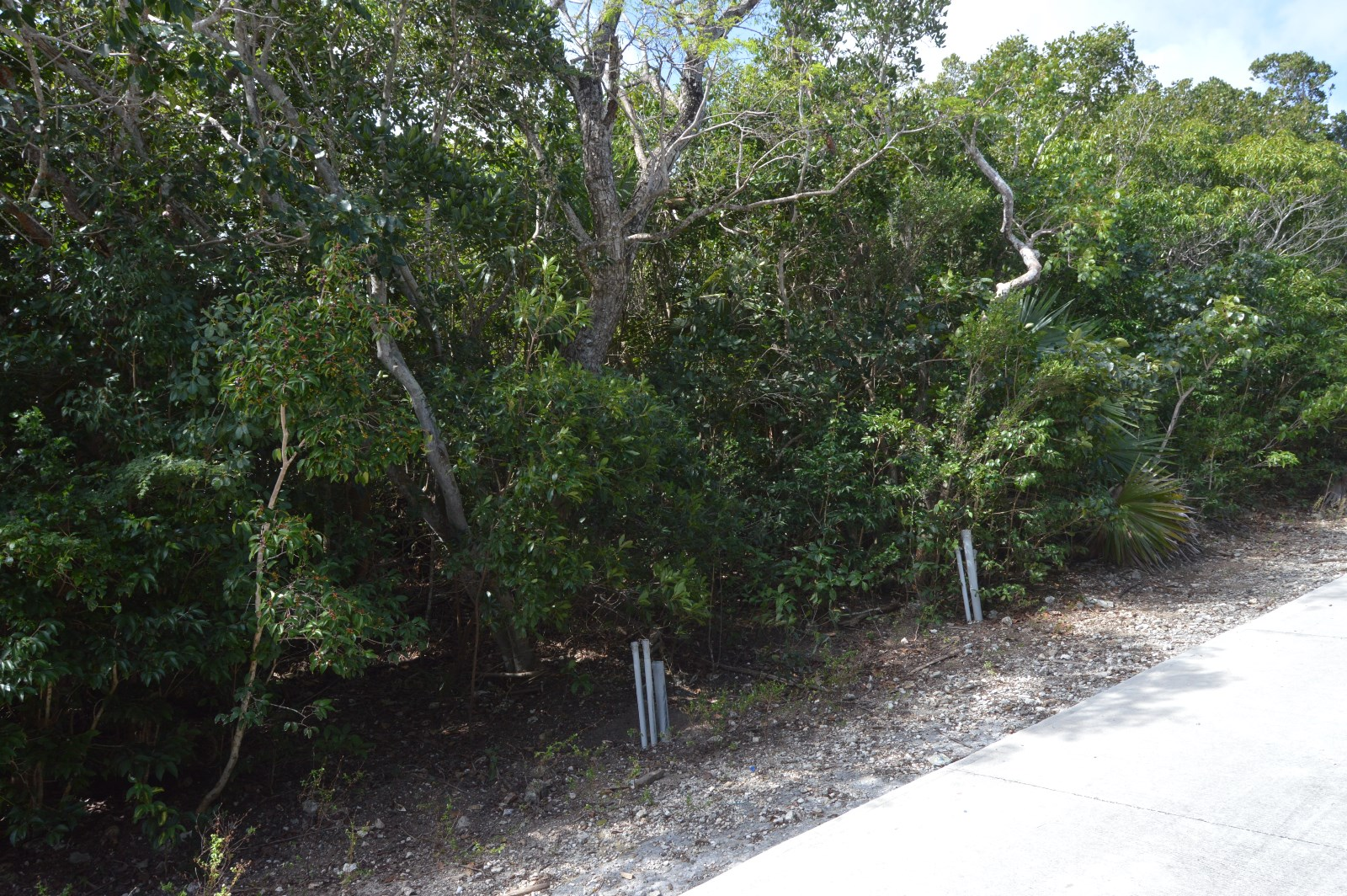 Additional photo for property listing at Great Development Oppurtunity in Elbow Cay, Abaco - MLS 29196 Abaco, Bahamalar