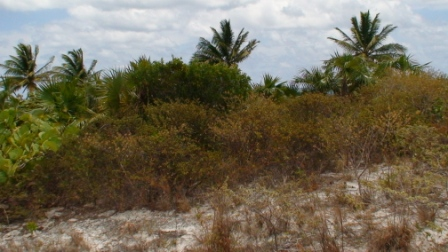 Additional photo for property listing at Fine Bay Beachfront Parcel Cat Island, Bahamas