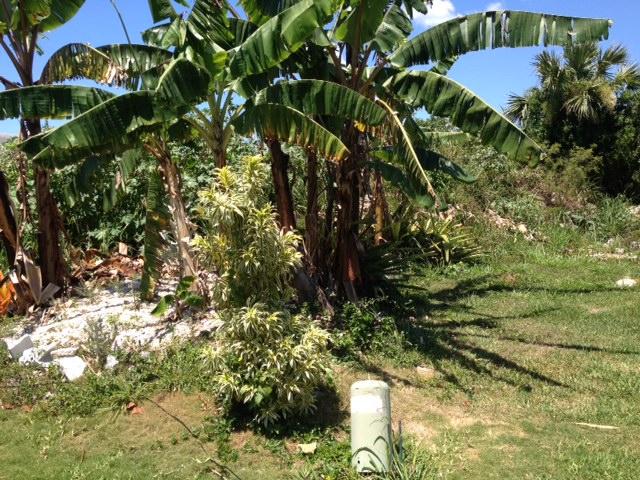 Additional photo for property listing at Acreage at South Hillside Estate Nassau And Paradise Island, Bahamas