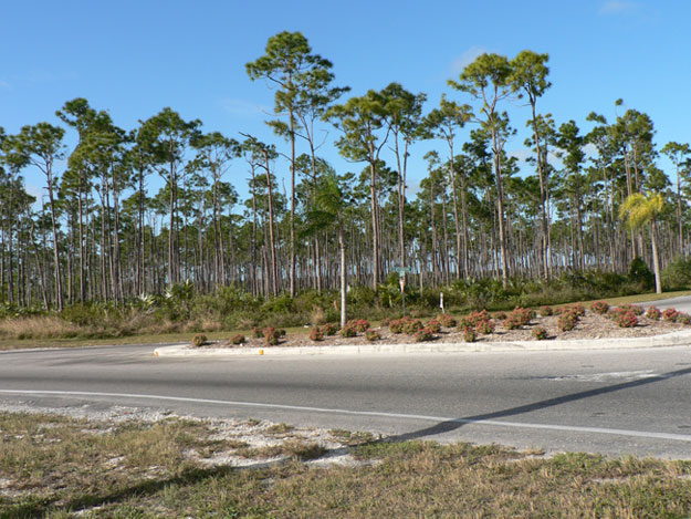Additional photo for property listing at Prime Commercial Industrial Tract Grand Bahama And Vicinity