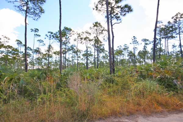 Additional photo for property listing at 12 adjoining Multi-family lots off Midshipman Road Sherwood Forest, Grand Bahama, Bahamas