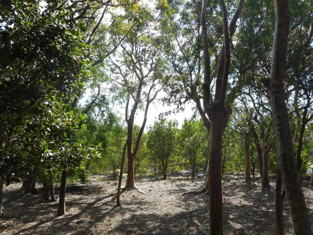 Additional photo for property listing at Russel Island Lot With Ocean and Canal Views Russell Island, Eleuthera, Bahamas