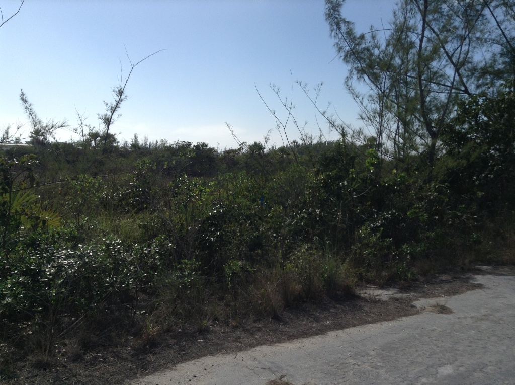 Additional photo for property listing at Development Potential in Coral Harbour 巴哈马