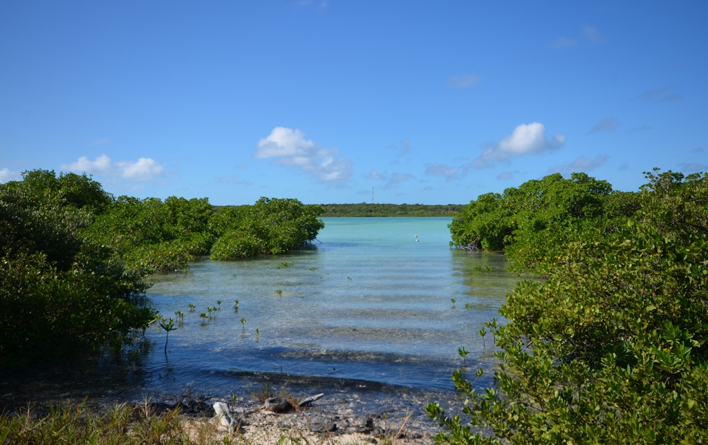 Additional photo for property listing at Wonderful Windermere Beachfront Lot MLS 26783 Eleuthera, バハマ