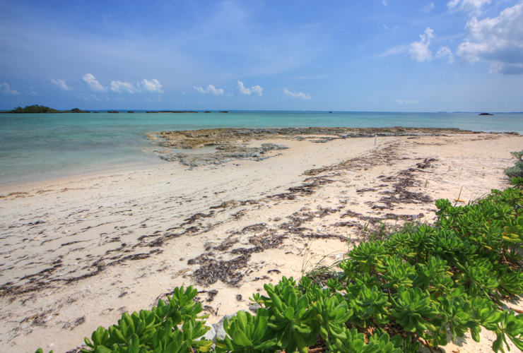 Additional photo for property listing at Palmetto Beach Estate, Abaco Island, Bahamas. Turnkey Estate Abaco, 巴哈馬