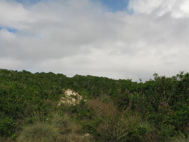 Additional photo for property listing at 44 Acres of Gorgeous Waterfront!!! Great Investment Opportunity!! Eleuthera, Багамские Острова