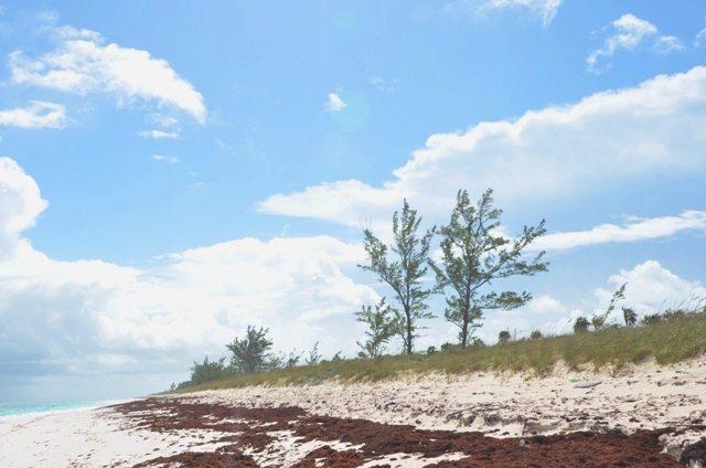 Additional photo for property listing at Rare, Beach Estate Acreage in the Heart of Eleuthera, Governor's Harbour - Lot 3, Nix Point Eleuthera, Bahamas