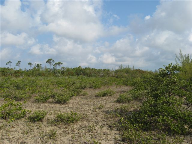 Additional photo for property listing at Well Priced Acreage In Close Proximity To Marsh Harbour Abaco, バハマ