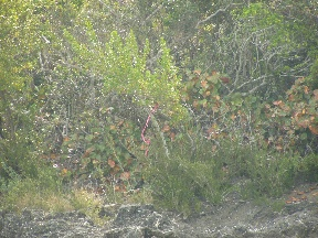 Additional photo for property listing at Undeveloped Lubbers Quarters Property Abaco, Bahamas