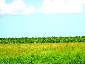 Additional photo for property listing at Beautiful Farm Land Andros, Bahamas