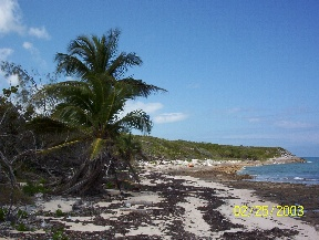 Additional photo for property listing at Oceanfront Land Parcels Andros, バハマ